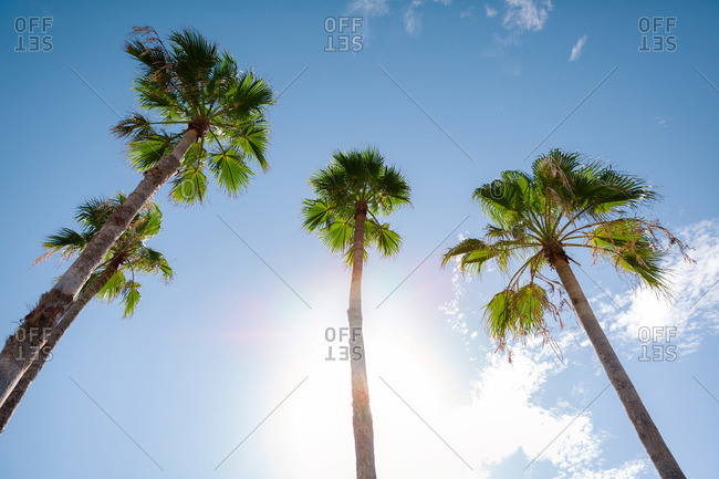 Low angle view of palm trees and blue sky