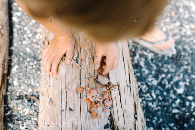 Kid collecting crab shells on log