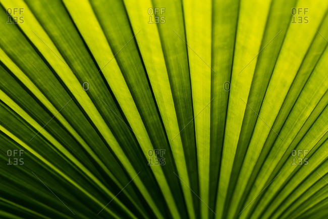 A green frond