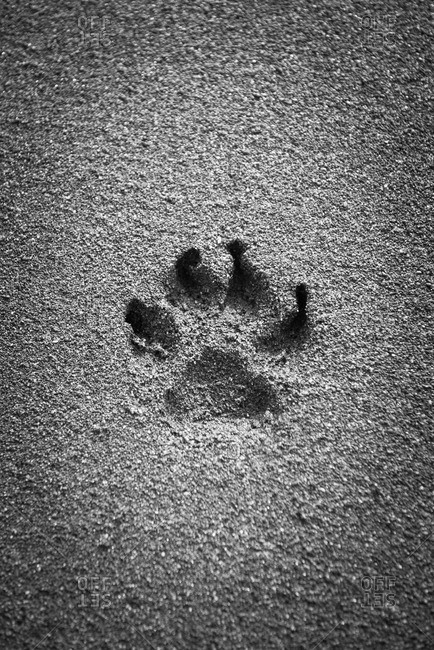 Dog footprint in the sand