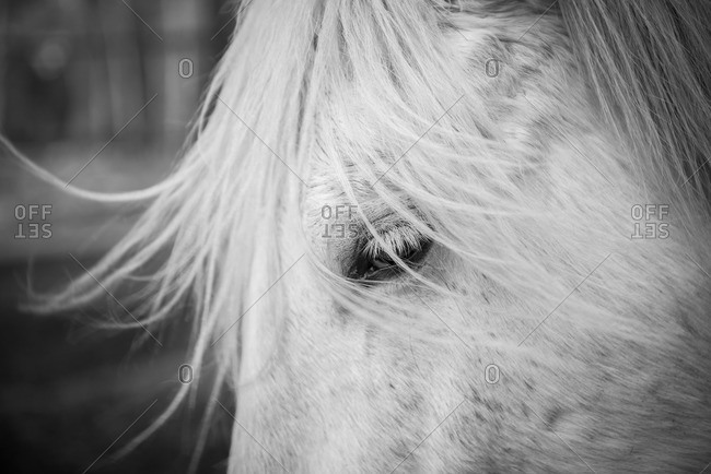Close-up of white horse's eye and forehead