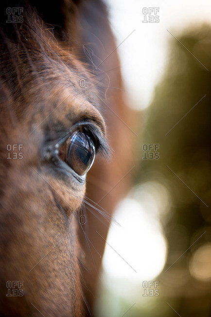Close-up of a brown horse's eye