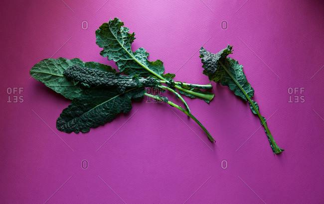 Tuscan kale leaves on purple background