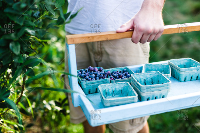 Man holding crate with cartons of blueberries
