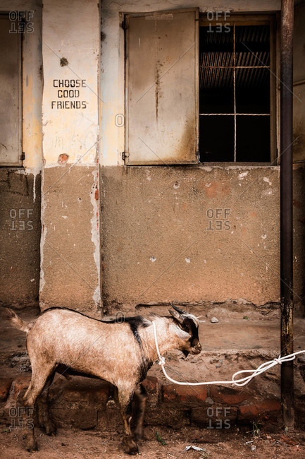 Goat tied to a post outside of a cement building