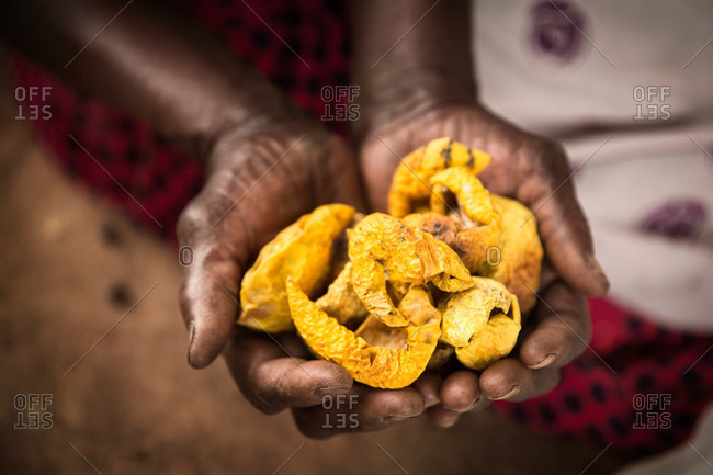 Woman's hands holding shriveled yellow fruit