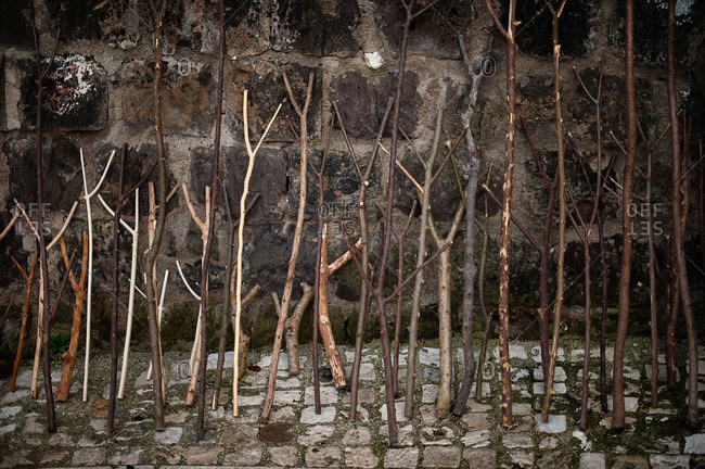Bare branches leaning against a stone wall