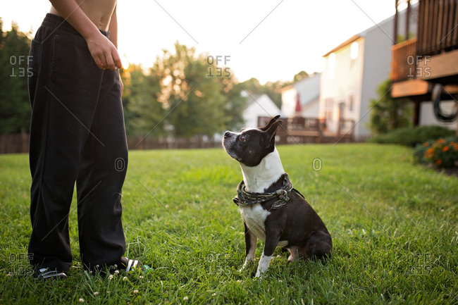 French bulldog sits obediently at boy's feet