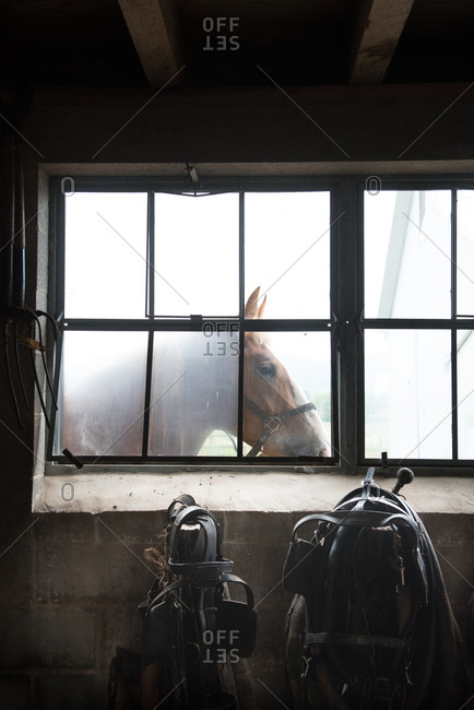 Horse seen through a barn window