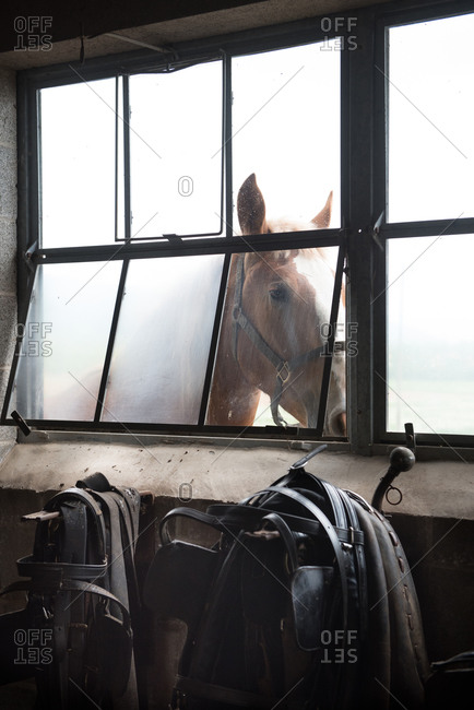 Horse standing at a barn window