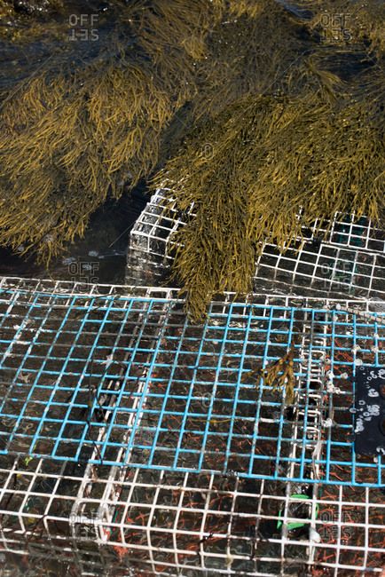 Crab pots covered in seaweed