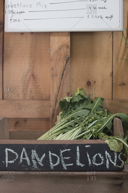 Dandelion greens at a farm stand