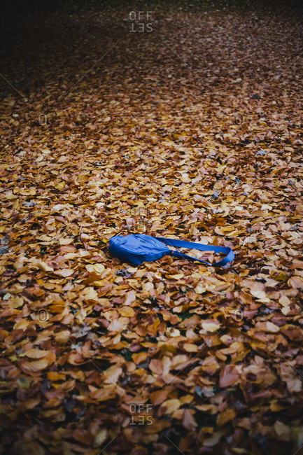 A lost purse in a bed of dry leaves