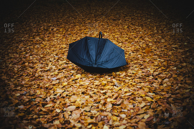 An open umbrella in a bed of dry leaves