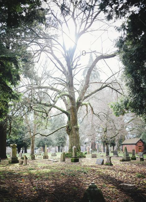 A tree in a cemetery in Portland