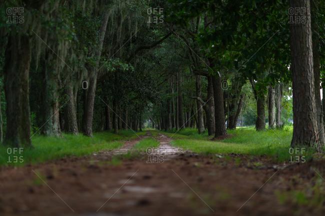 Dirt tracks leading through woods