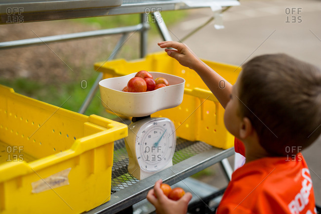 Boy places tomatoes in a vegetable scale