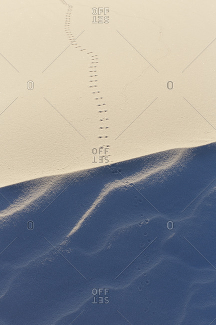 Animal tracks in the sand at White Sands National Monument, New Mexico