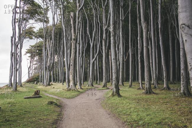 Fork path at Gespensterwald, Nienhagen
