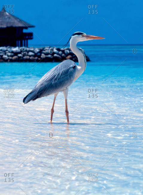 Exotic bird on beach