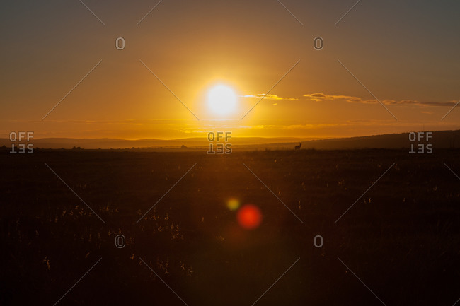 Glowing sun low on horizon over rural field