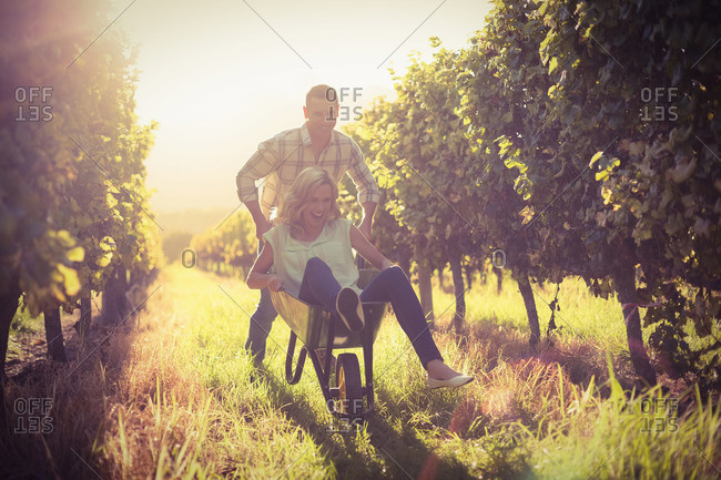 Happy couple playing with a wheelbarrow between grapevine at vineyard against sundown