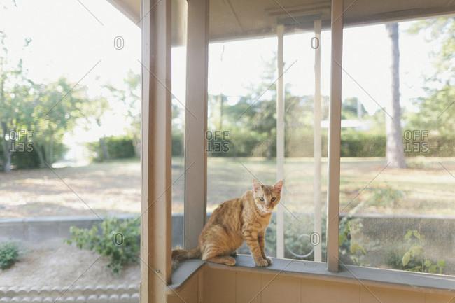 Cat sitting on windowsill of three season porch