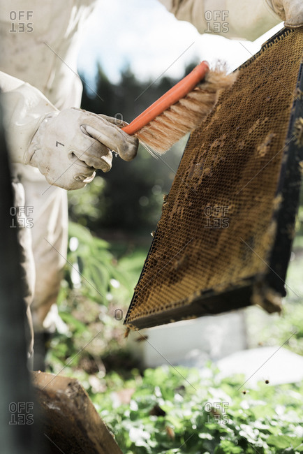 Beekeeper brushing a frame to remove bees