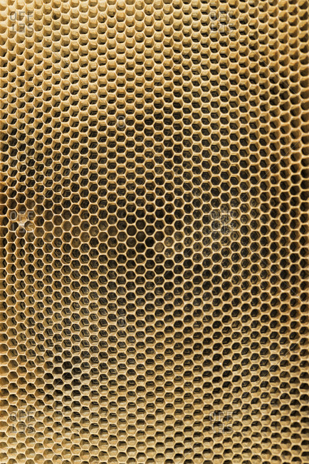 Close up of a honeycomb
