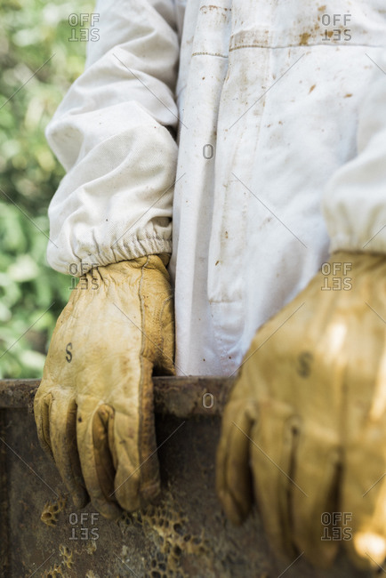 Gloved hands of a beekeeper holding a frame from a hive