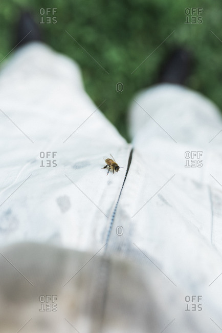 Lone honey bee on the front of a beekeeper's suit
