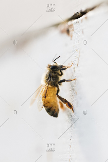 Close up of a honey bee the side of a hive
