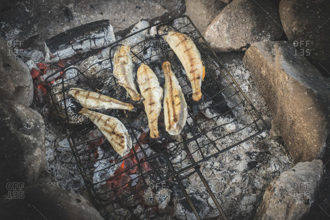 Grilling fish over a camp fire