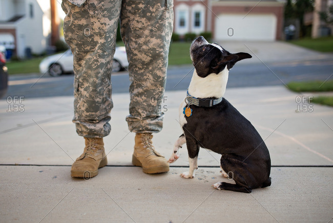 Dog looking up at man in combat boots