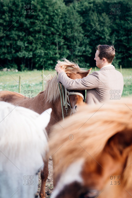Man putting a bridle on a horse in a field