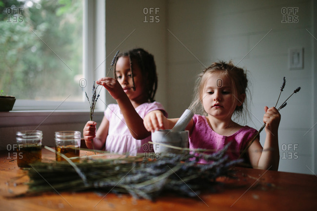 Two girls working with dried lavender flowers to make scented oil