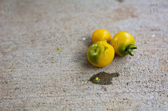 Three yellow tomatoes, one with a hole