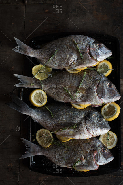 Whole fish on a tray with lemons and herbs