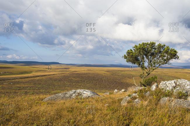 Highlands of the Nyika National Park, Malawi, Africa