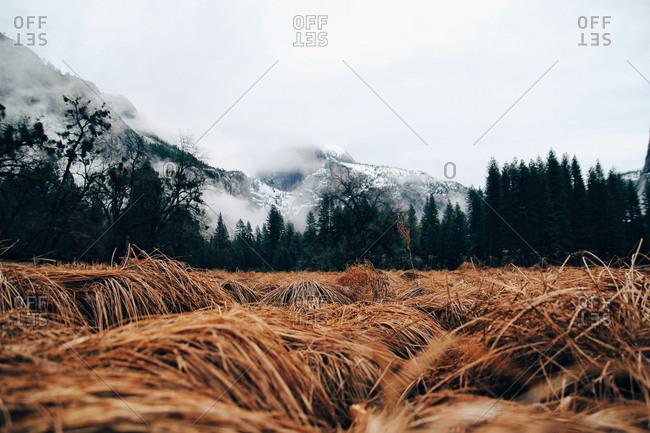 Grassy field near a mountain in the fog