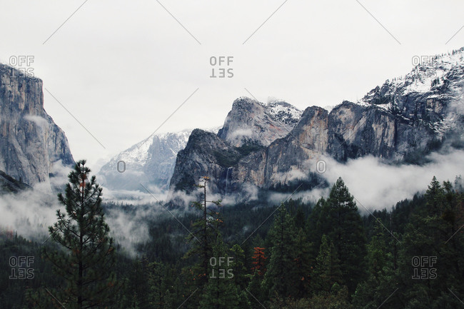 Treetops and mountains in the fog