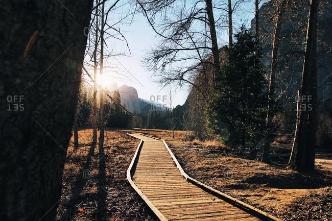 Boardwalk in a mountain forest