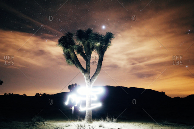 Light drawings around a yucca palm tree at night