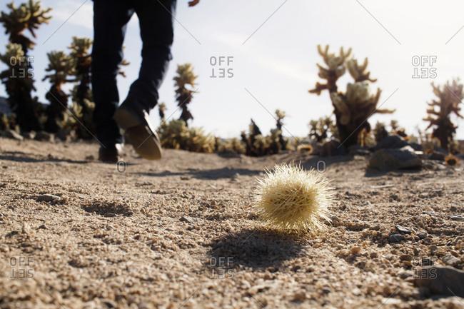 Tumbleweed and man's feet in a desert