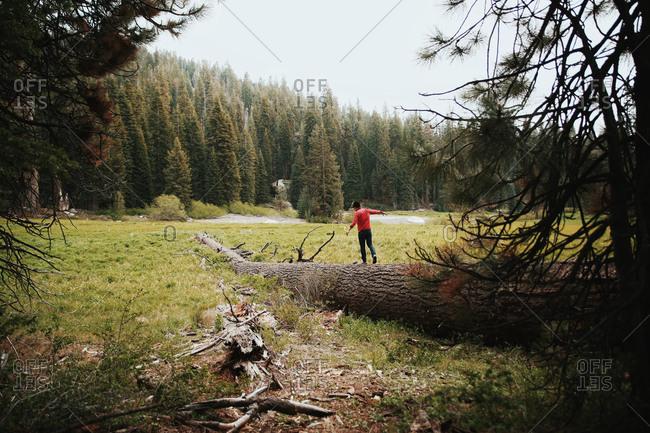 Man walking across a large fallen tree