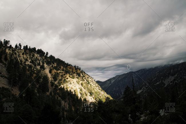 Sunny patch on a mountainside