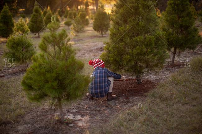 Boy using hand saw to cut down tree