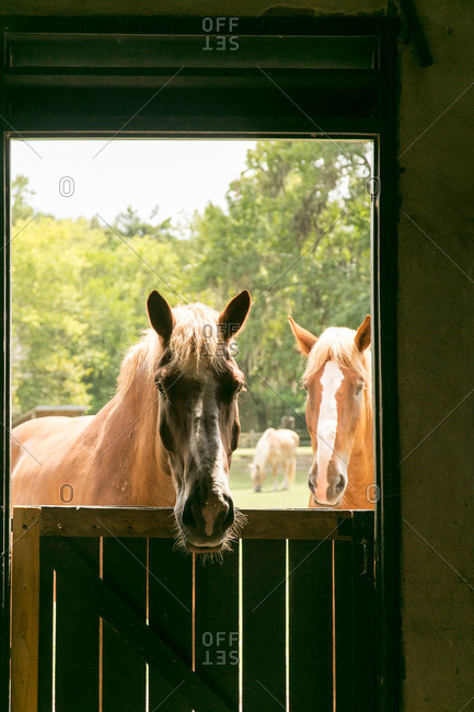Horses at Middleton Plantation in Mt. Pleasant, South Carolina