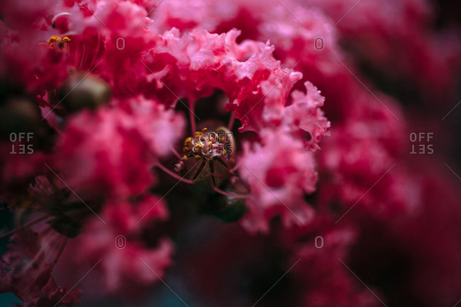 Close up of pink flower