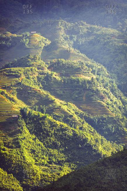 Terraced fields, Sa Pa, Vietnam